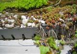 Traufausbildung mit Kiesstreifen und Entwässerungsblech