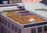 Rotes Gründach durch Wasser- und Düngermangel